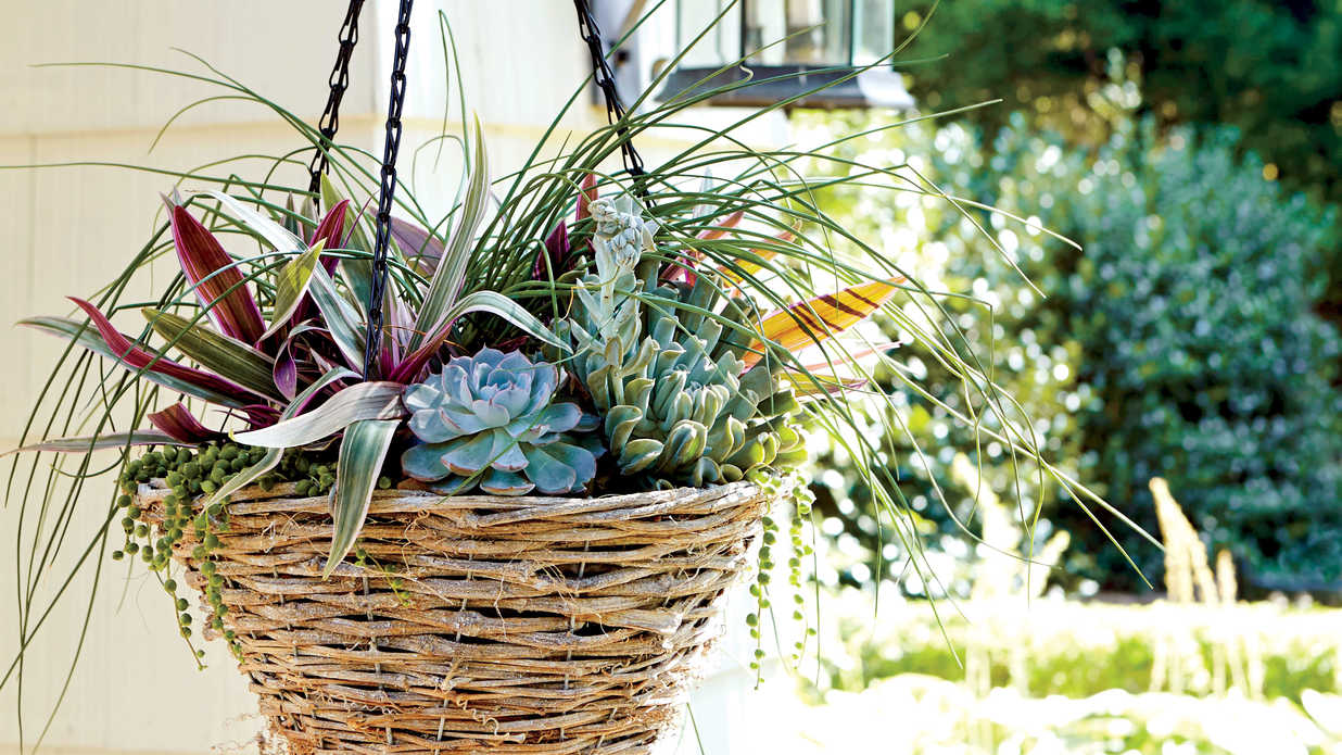 Hanging Container Gardens