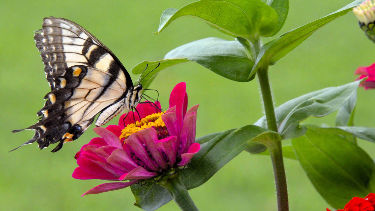 How To Bring Butterflies to Your Garden - Southern Living