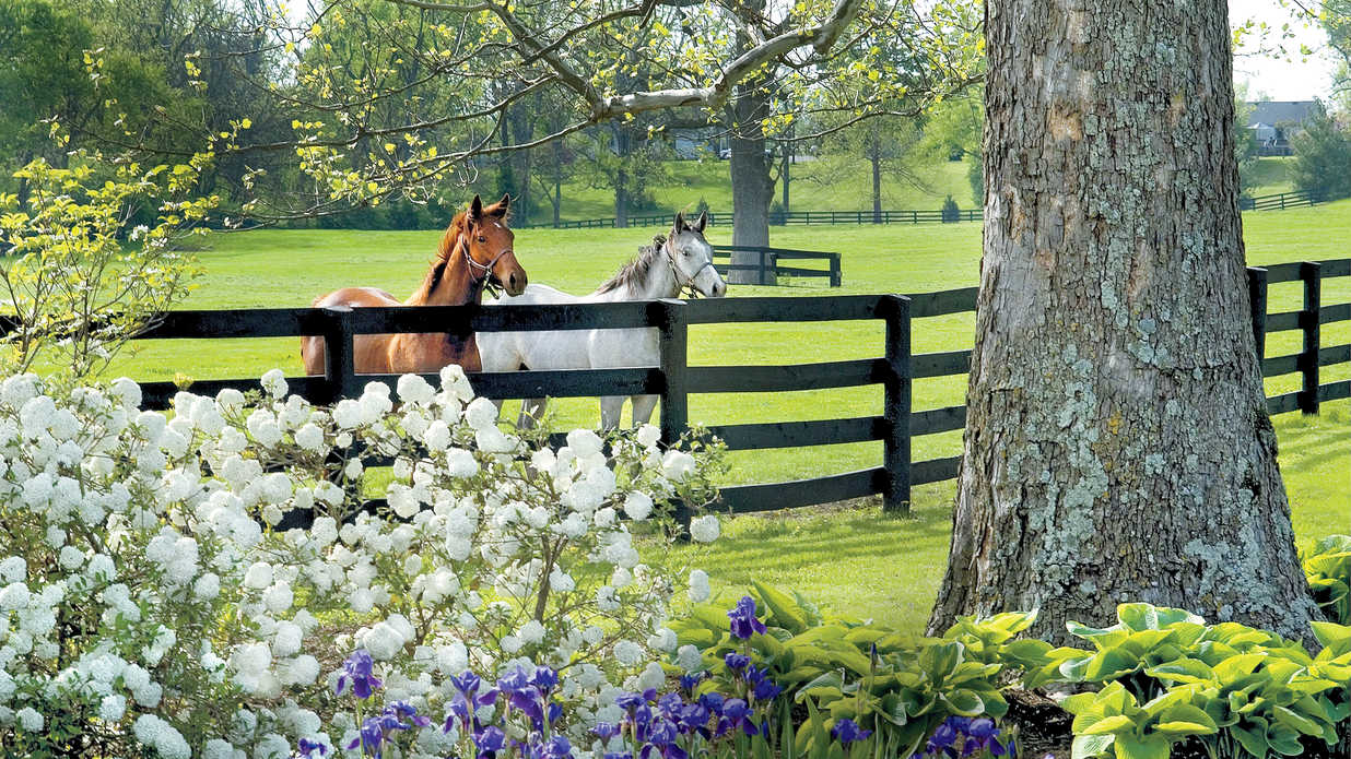 Saddle Up In Horse Country Lexington And Georgetown Ky