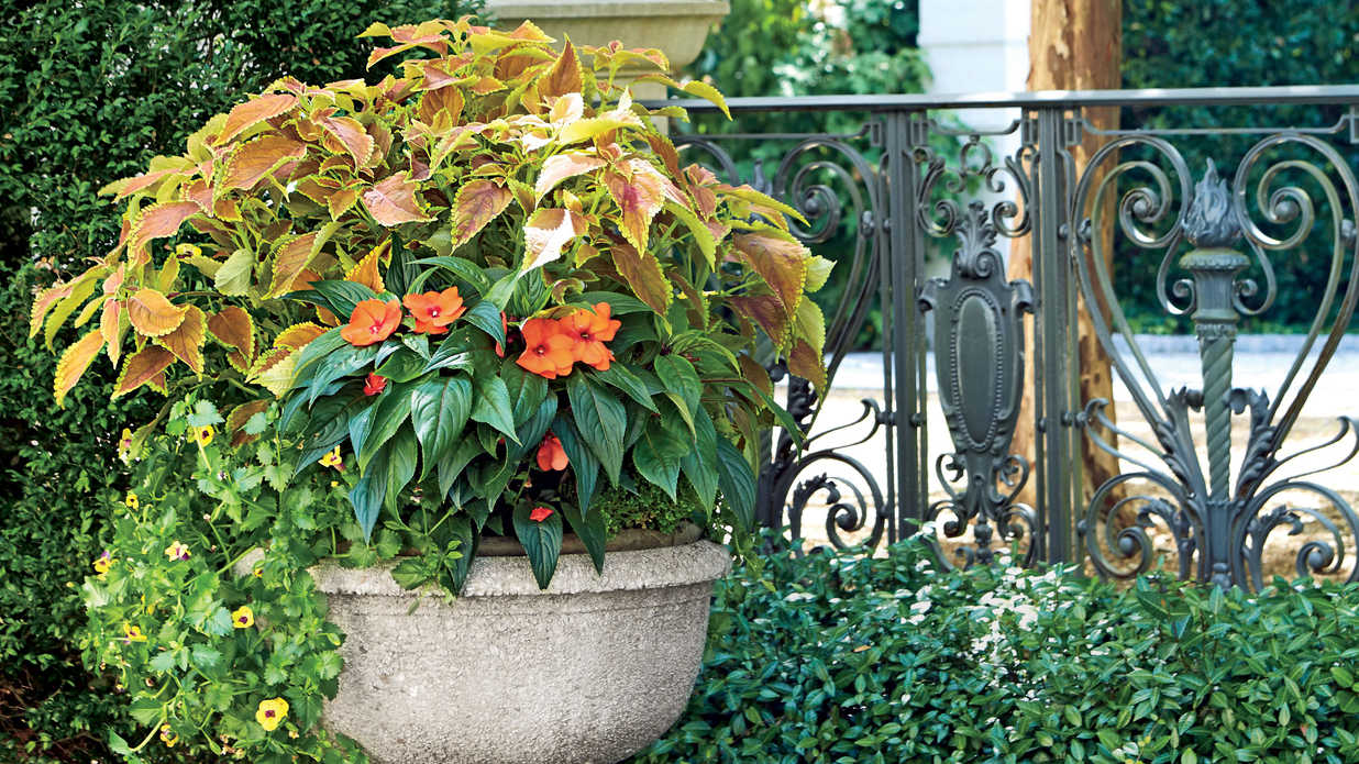spectacular container gardening ideas southern living - Garden Ideas Using Pots