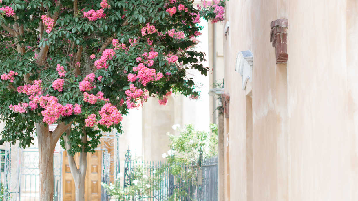 The South's Most Charming Streets