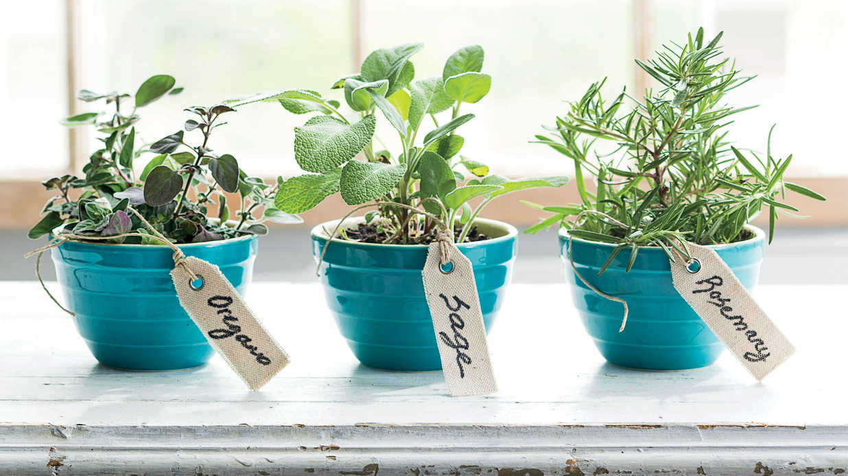 3 Easy Herbs - Southern Living