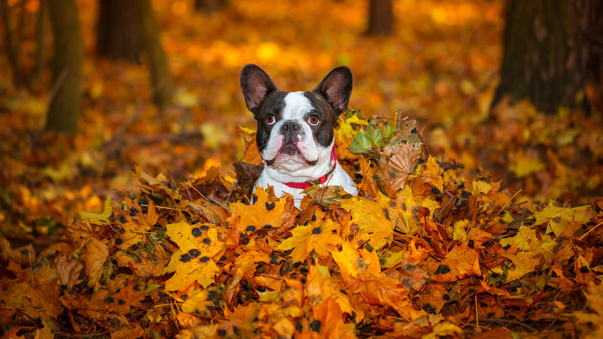 These Puppies Are Having a Better Fall Than You