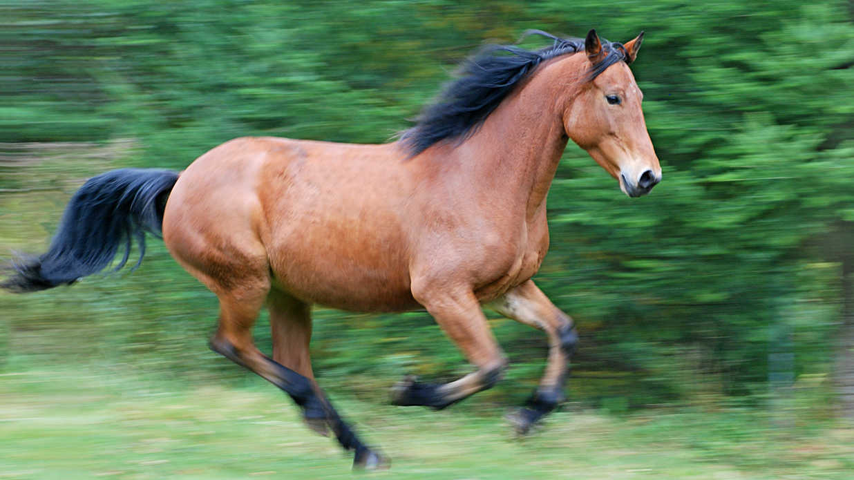 Southern Names for Pet Horses