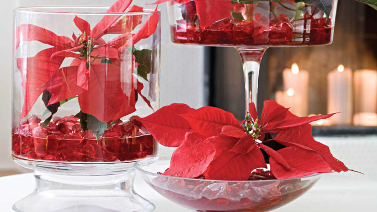 Show Off Your Poinsettias