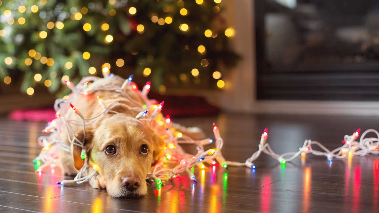 pet safety during christmas southern living