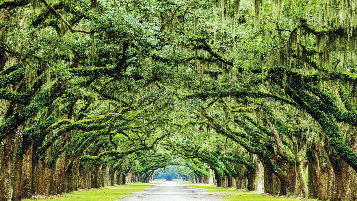 Southern Culture & Hospitality - Southern Living