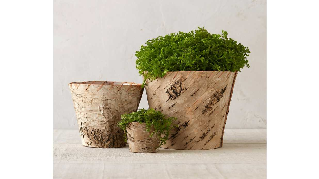 16 Perfect Pots for Indoor Plants Under $50