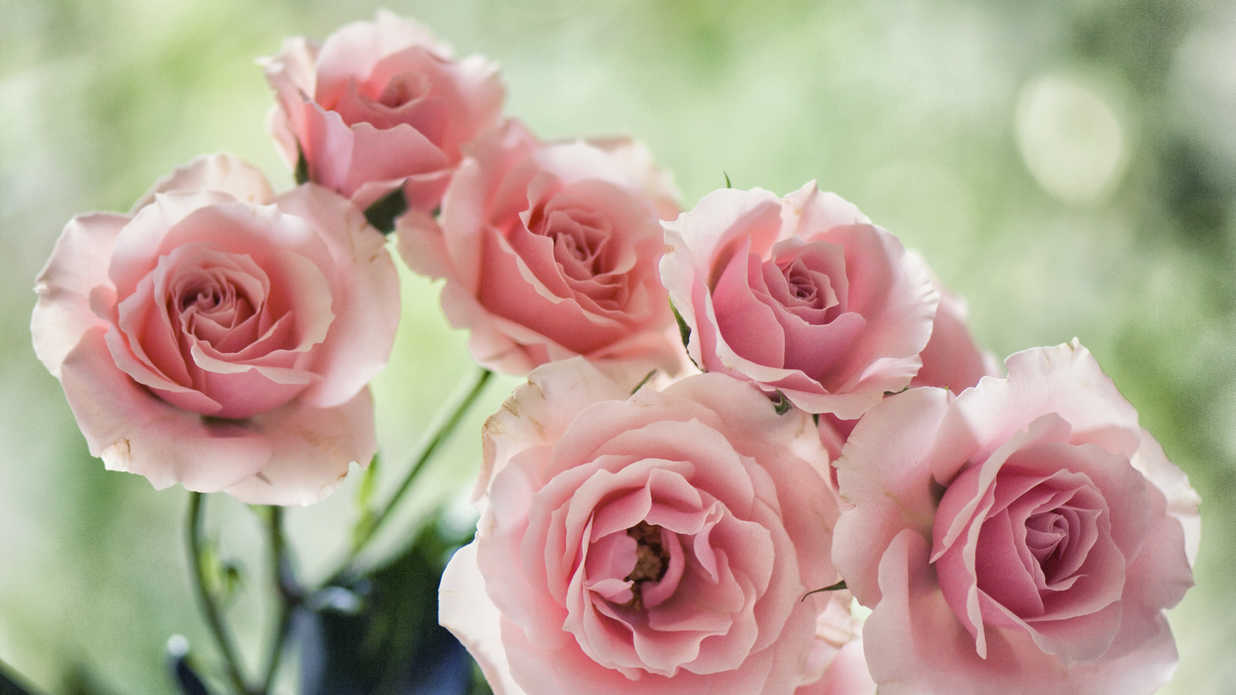 The Best Roses for Wedding Bouquets - Southern Living