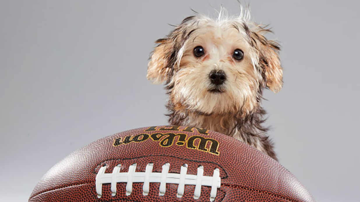 Meet the 2017 Puppy Bowl Players: Photos, Starting Lineups