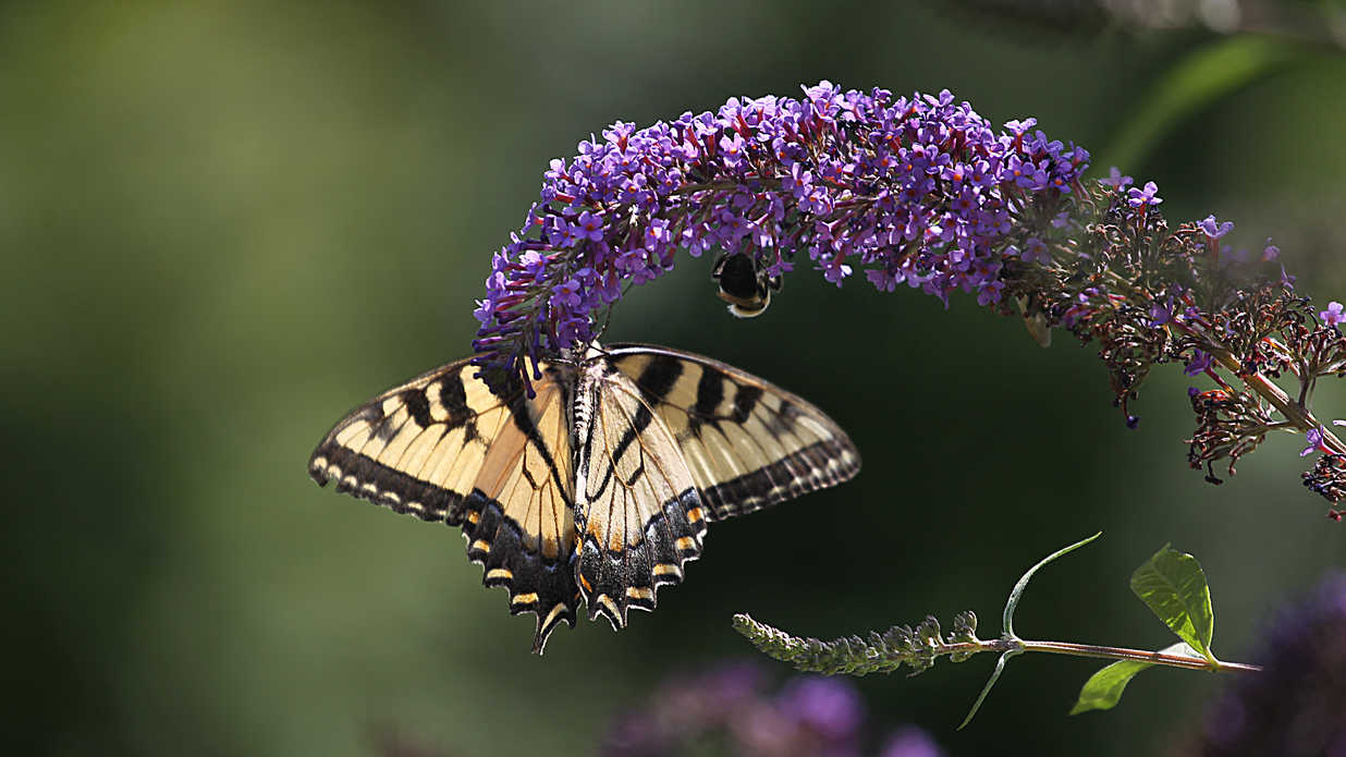 These Are The Best Flowers For Butterflies