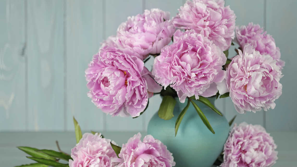 Here's How to Grow Peonies That Last Forever