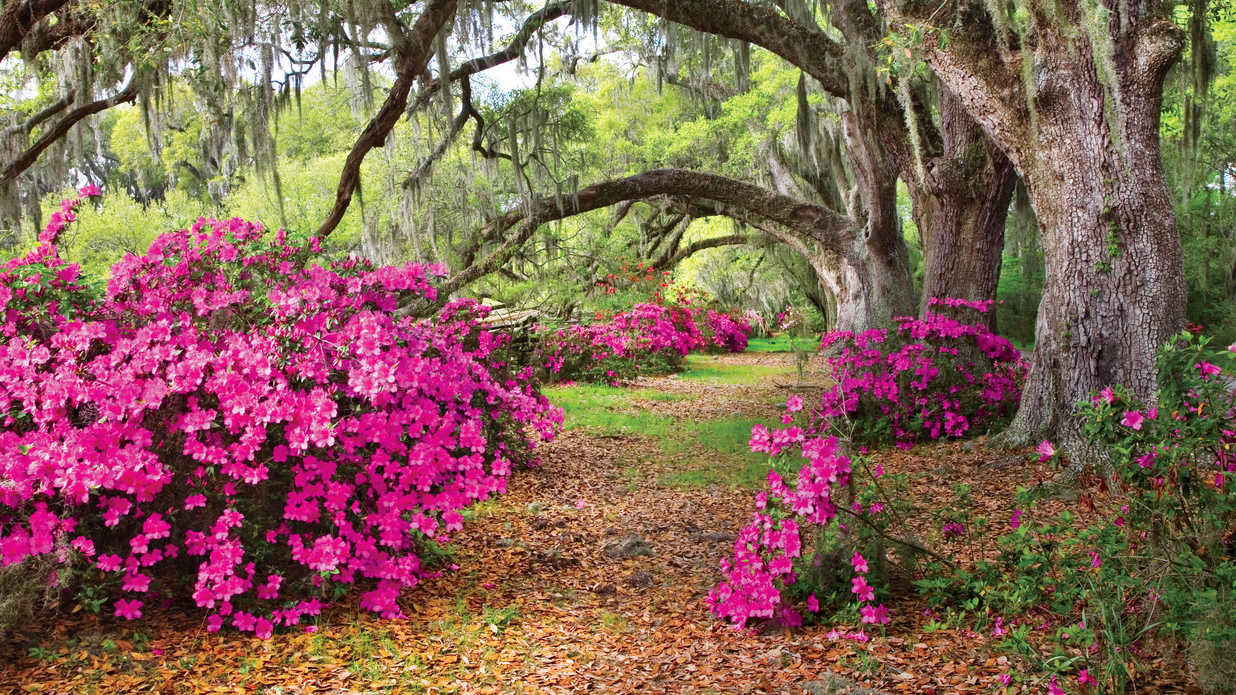 These Must-Visit Botanical Gardens Will Give You Spring Fever