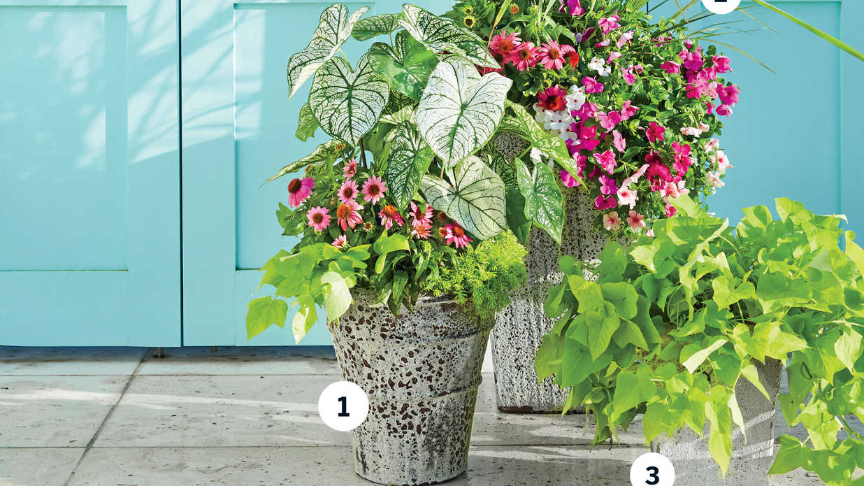 3 Florida-Inspired Container Gardens