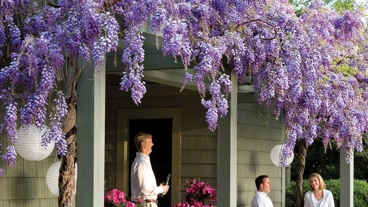 Beautiful Purple Wisteria Flowers With Fragrant Blooms Southern Living
