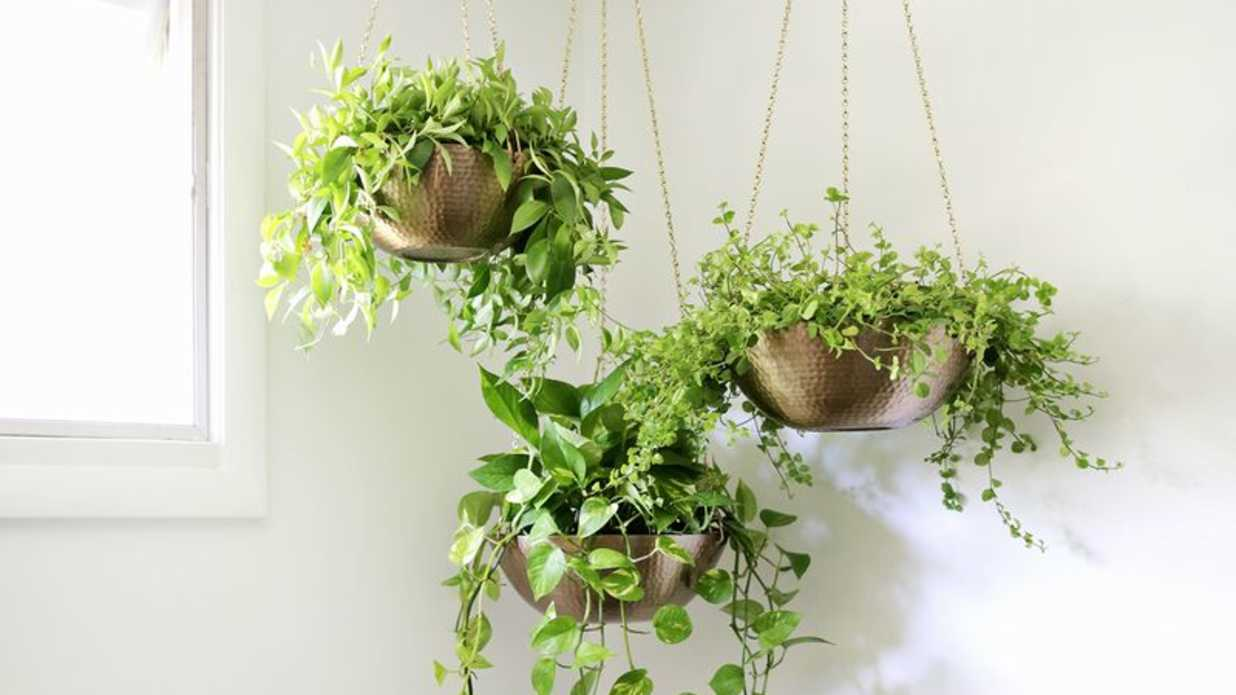 7 DIY Hanging Planters For That Empty Corner You Don't Know What To Do With