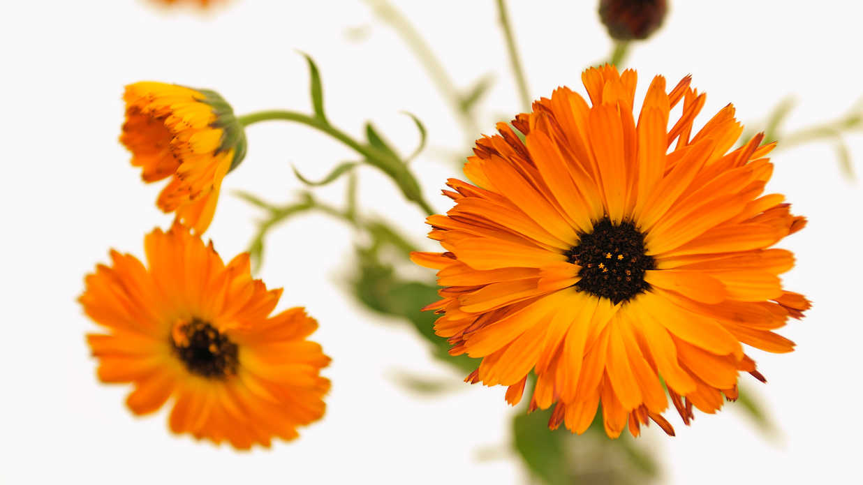 Flowers are Beautiful—and Great for Your Skin
