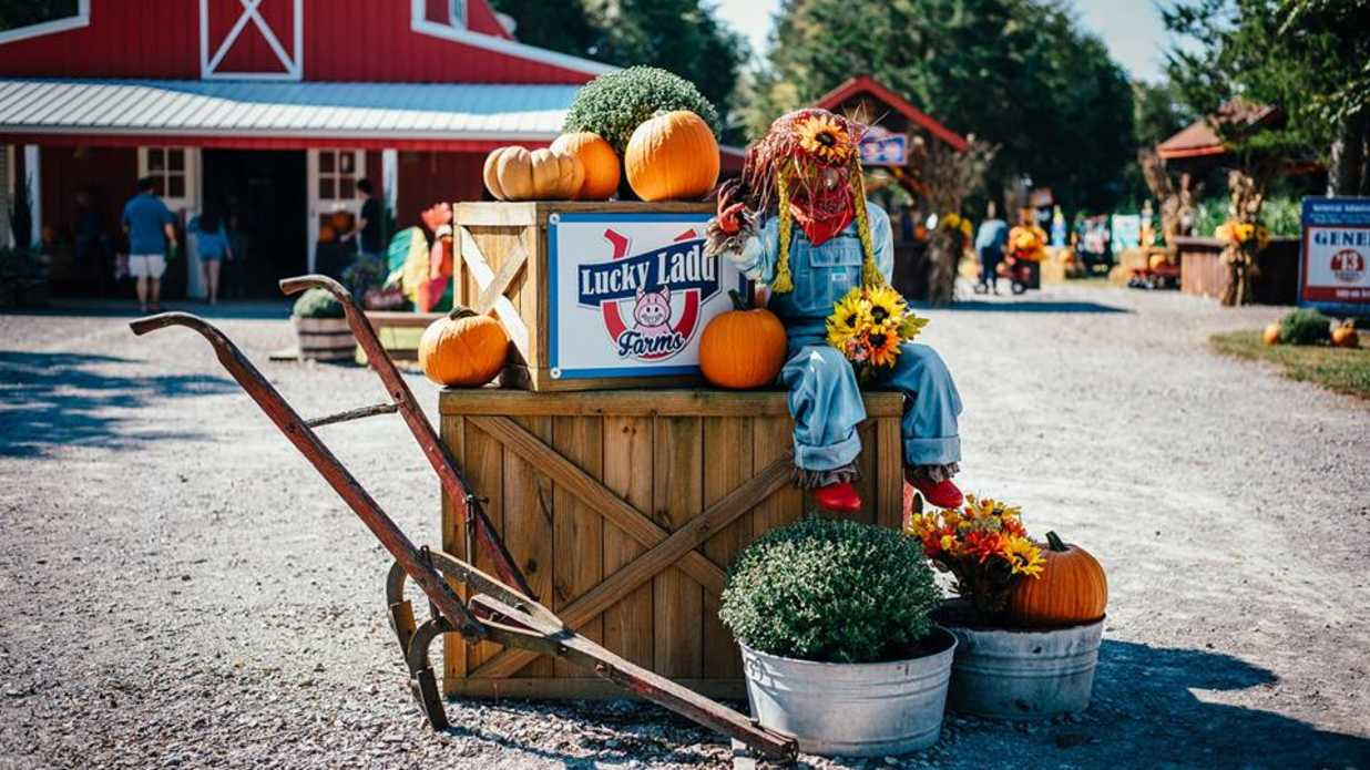 These Are The Best Pumpkin Patches in Every Southern State