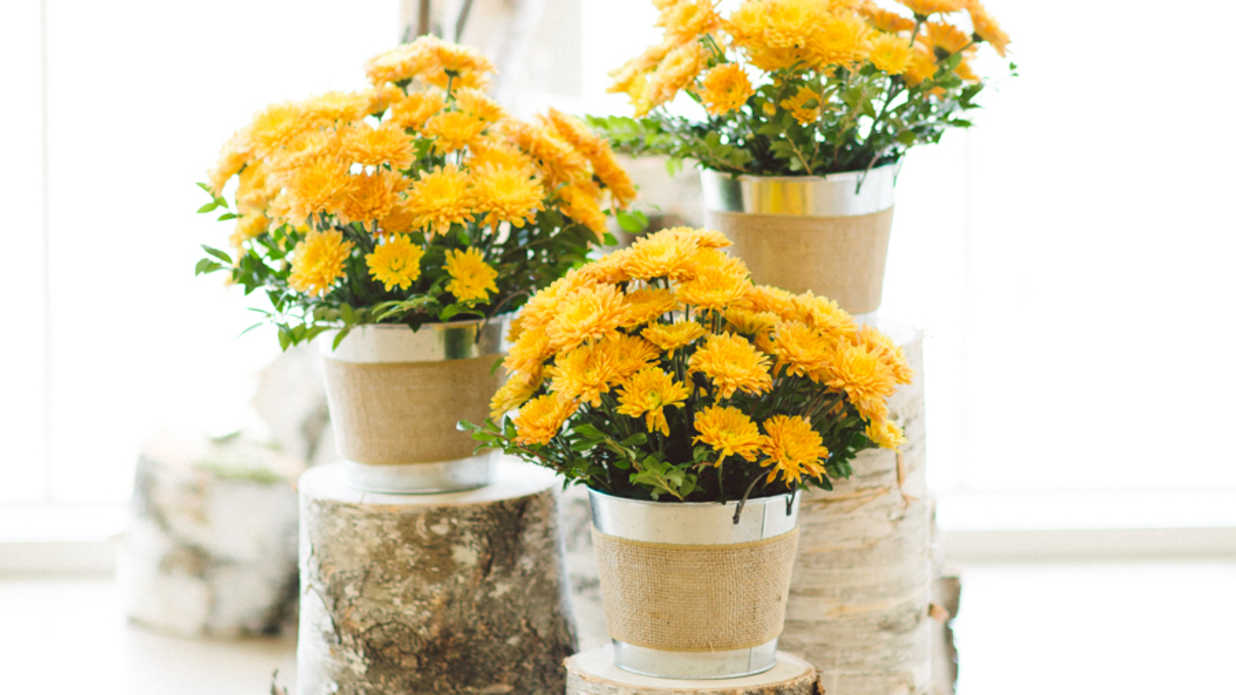 21 Magnificent Ideas for Potted Mums