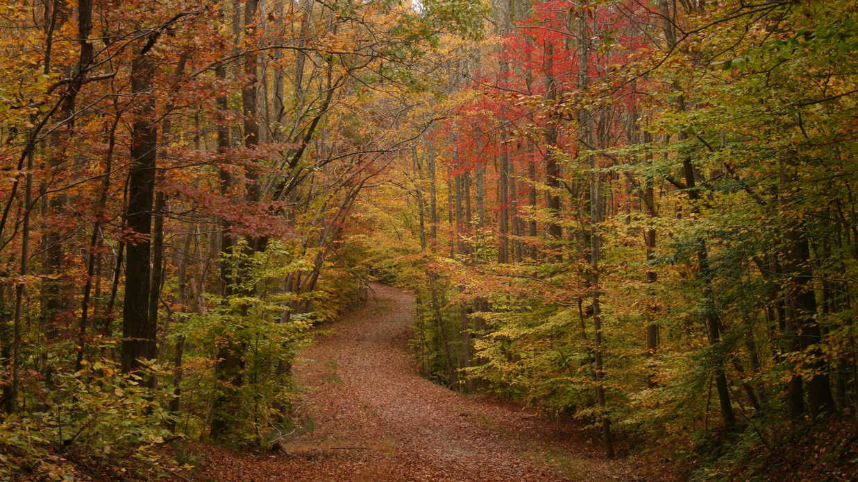 The Best Fall Campgrounds in Virginia