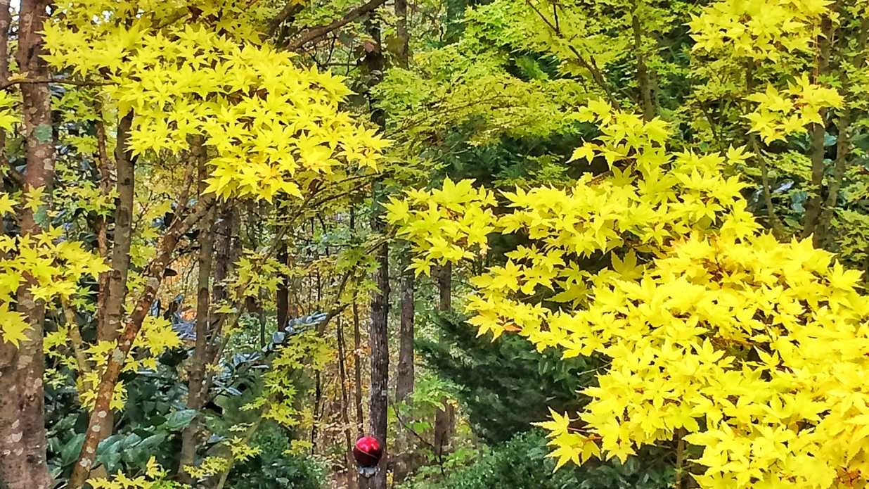 5 small trees for great fall color southern living for Great small trees