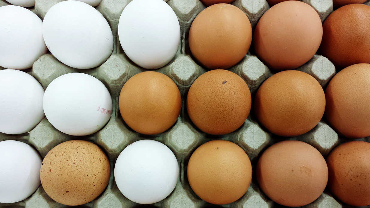 watch the real reason brown eggs are more expensive than white eggs