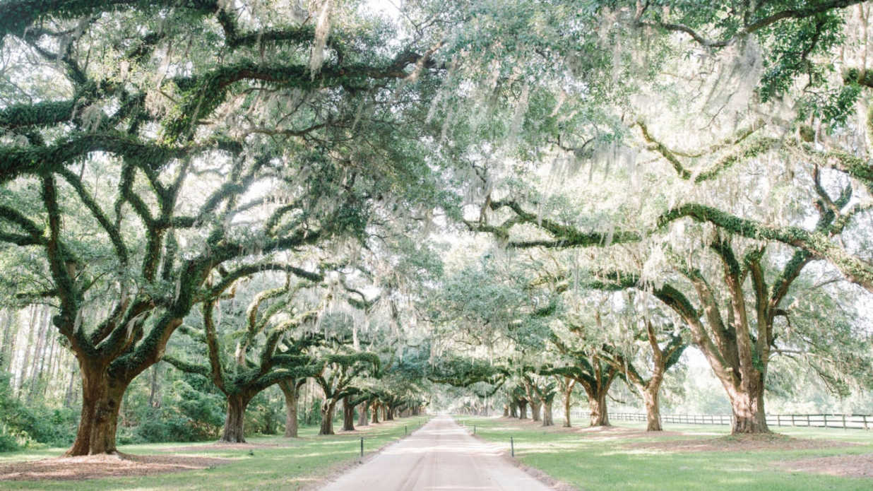 The Best Wedding Venues in Charleston