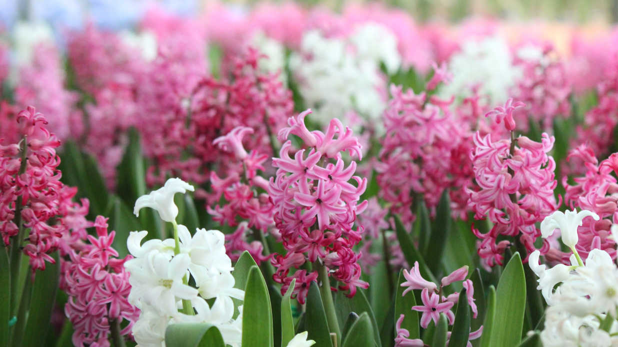 Fragrant Southern Flowers for Your Garden