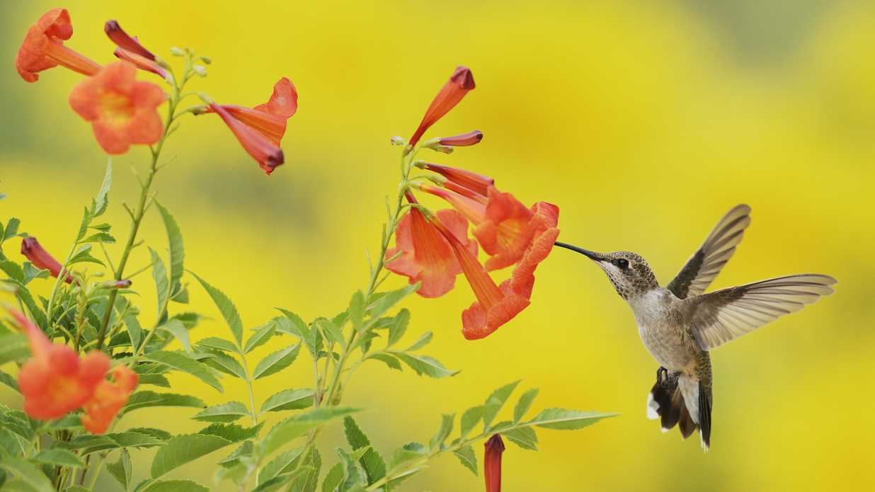6 Flowers That Attract Hummingbirds To Your Garden Southern Living