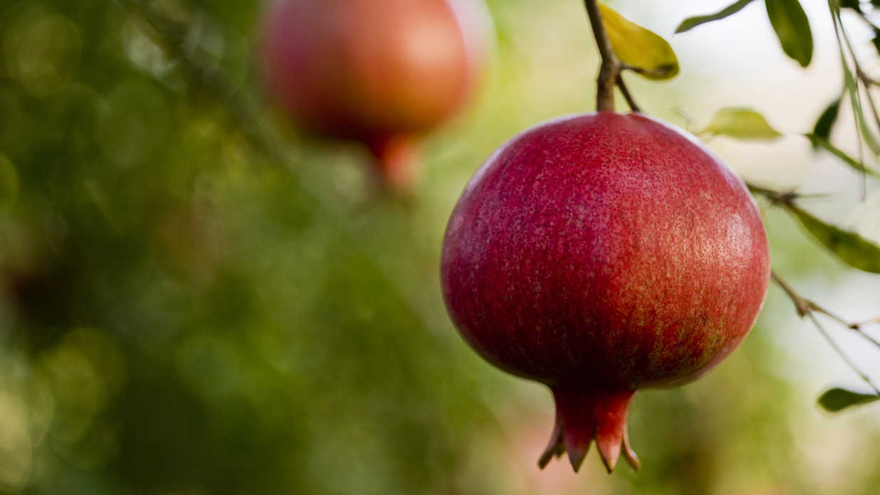 10 Plants You Should Always Prune in the Fall