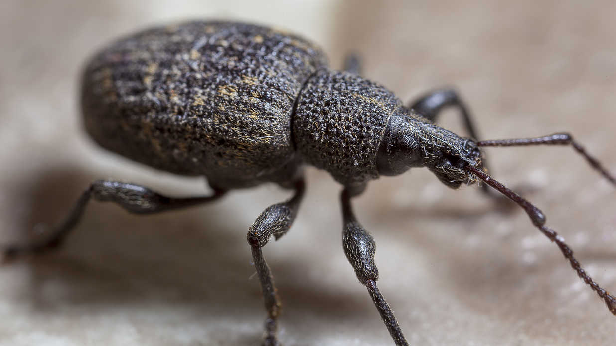 11 Bugs That Look Scary But Are Actually Harmless