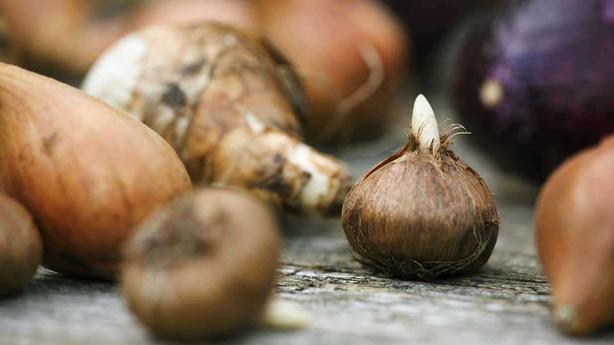 5 Critter-Proof Bulbs I'm Planting Now