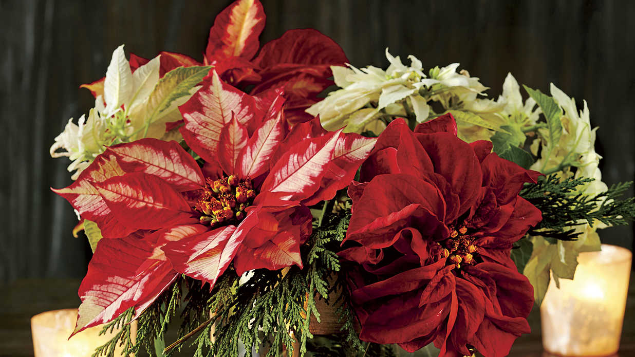 39 Festive Christmas Centerpieces for Your Table
