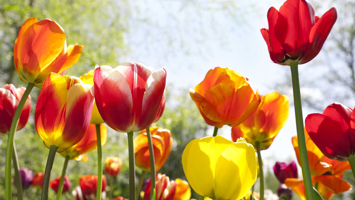 14 Popular Easter Flowers and What They Symbolize