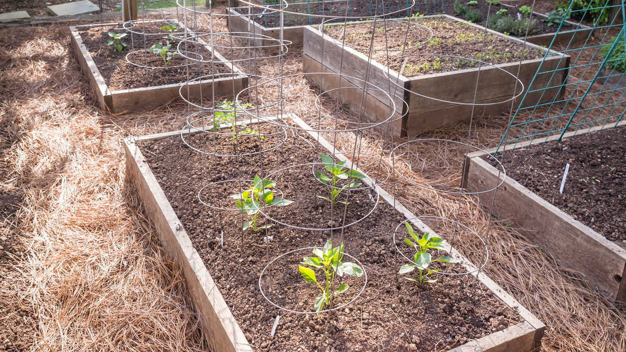 This Birmingham Couple Reaps 500 Pounds of Produce From Their 600-Square-Foot Garden