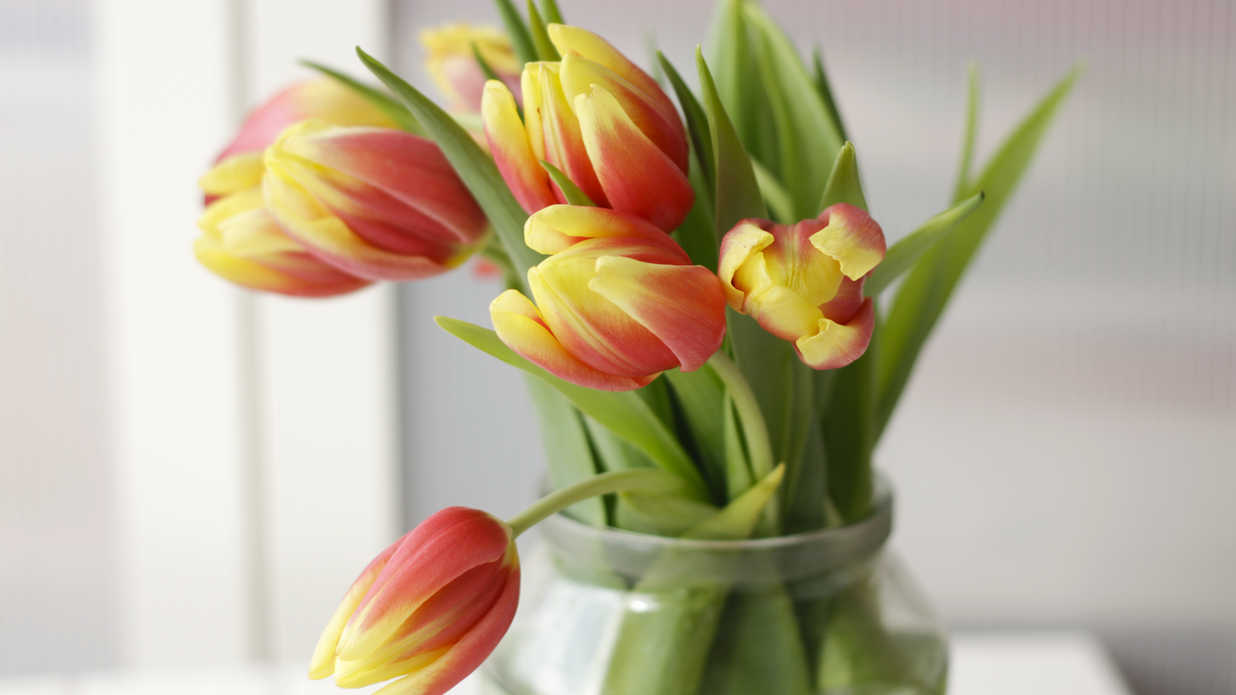 WATCH: Mother's Day Flowers and Their Meanings
