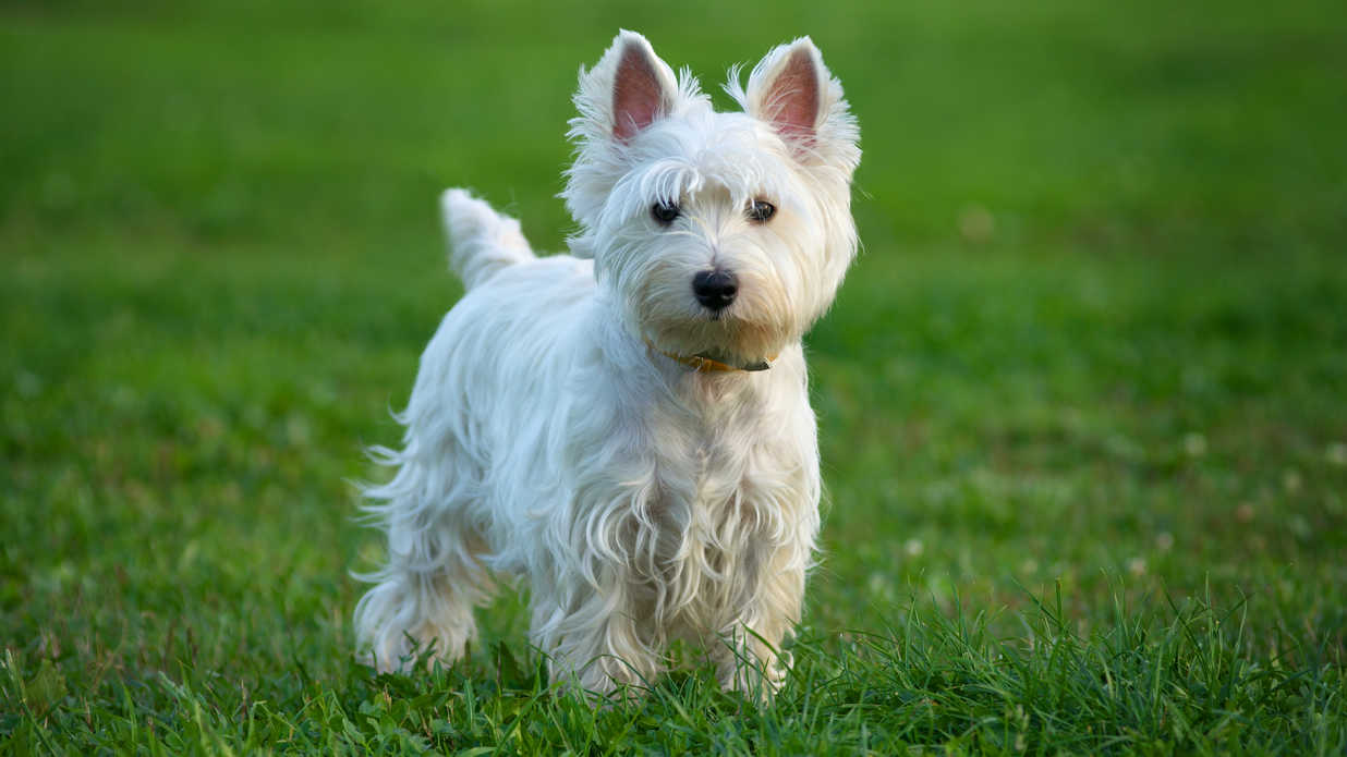 30 Small Dog Breeds That Make Great Pets