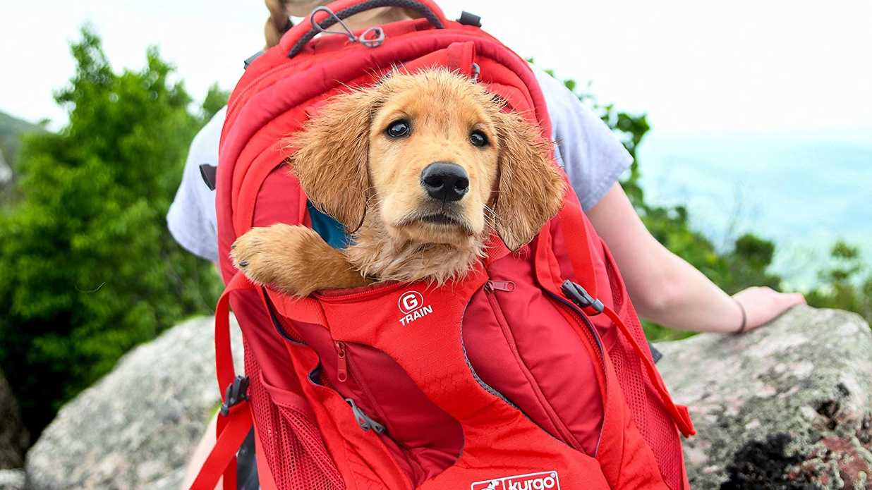 16 Great Dog Backpacks and Carriers for Your Furry Friend