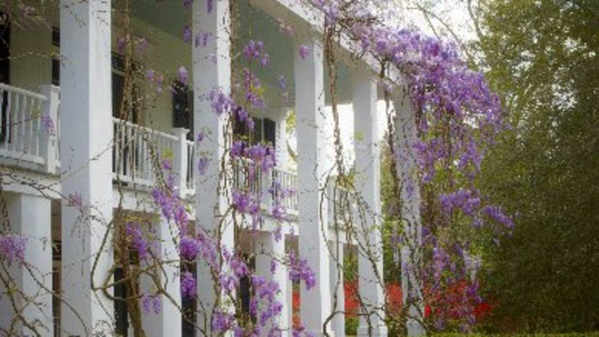 Five Monster Vines You Must Never Plant - Southern Living