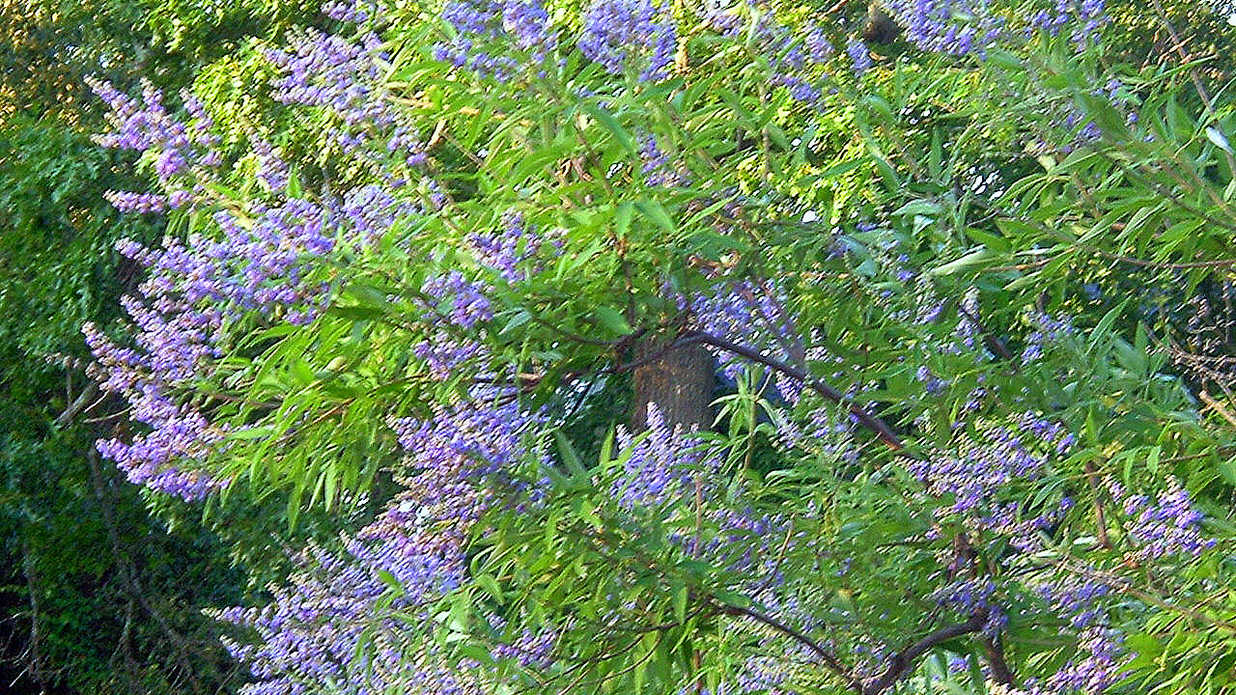 What Is The Plant With Purple Flowers New Top Artists 2018 Top