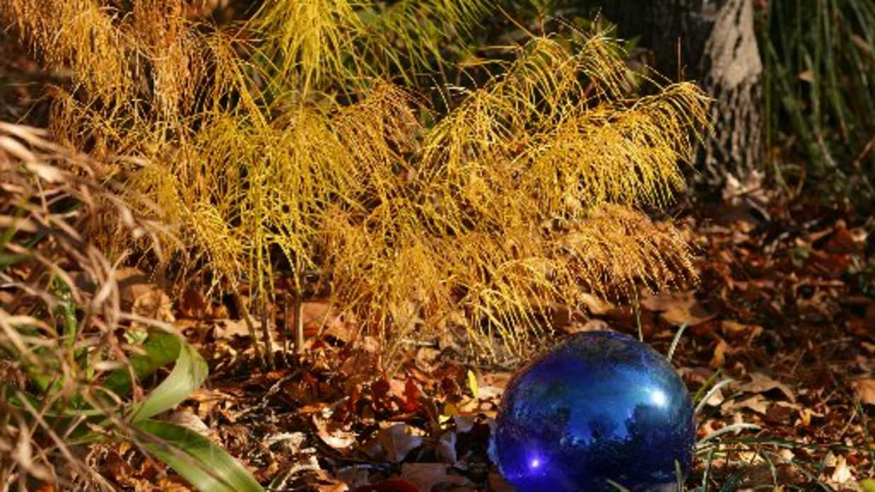 Great Perennials for Fantastic Fall Color - Southern Living
