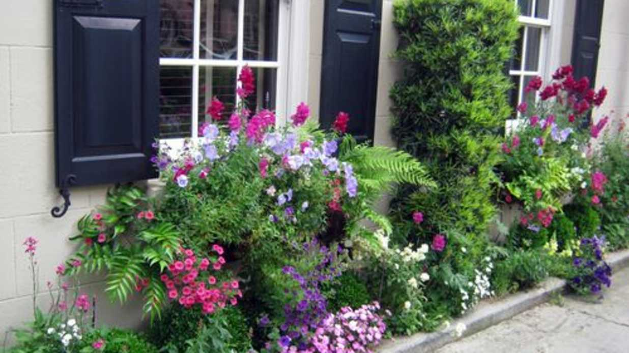 Charleston S Wonderful Window Boxes Southern Living