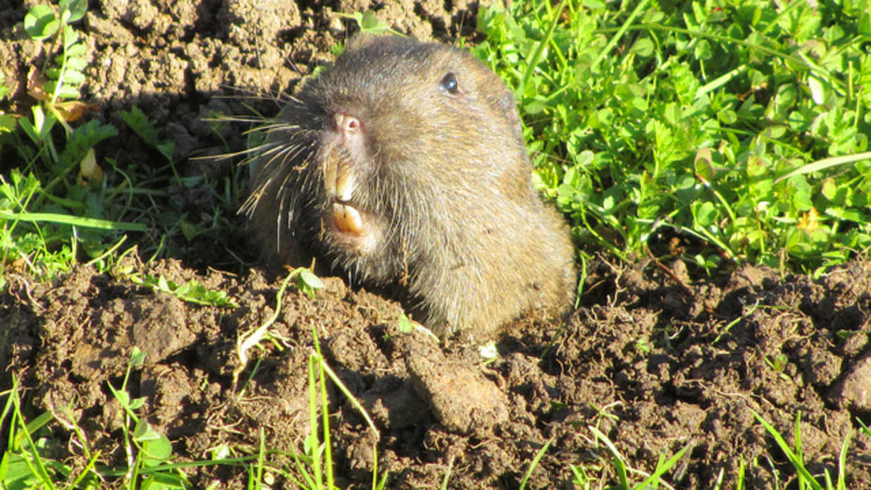 mole control kill them critters dead southern living