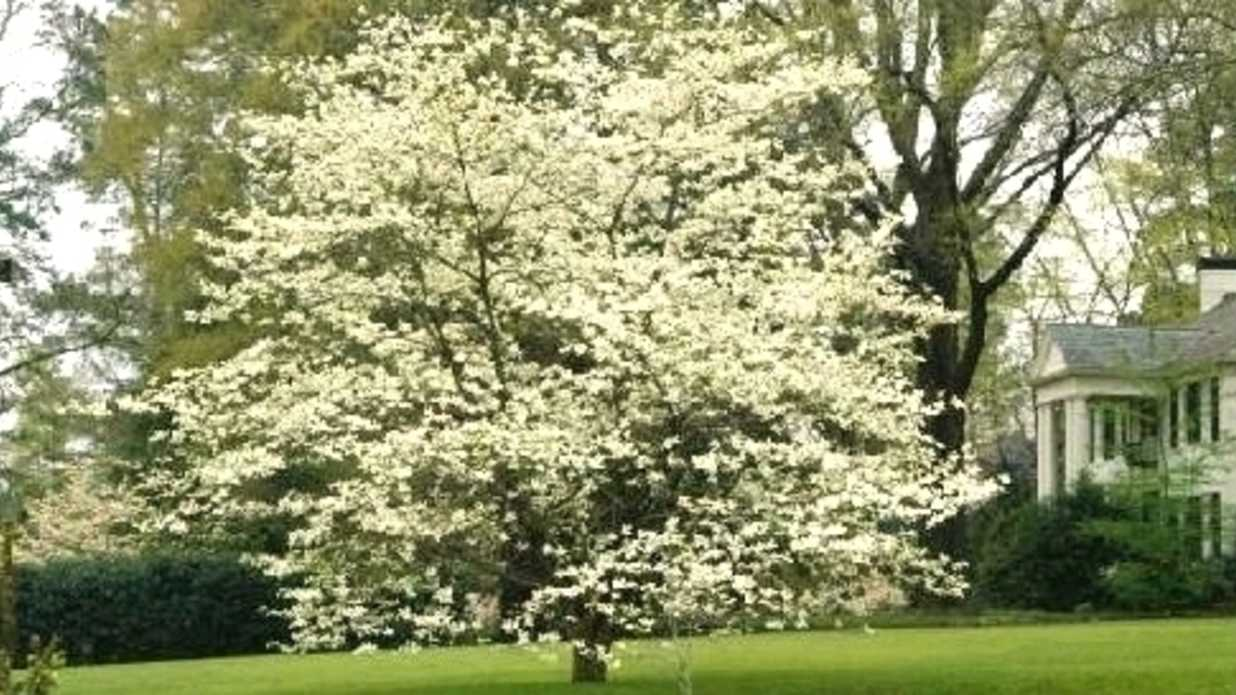 Don\'t Give Up On Dogwood