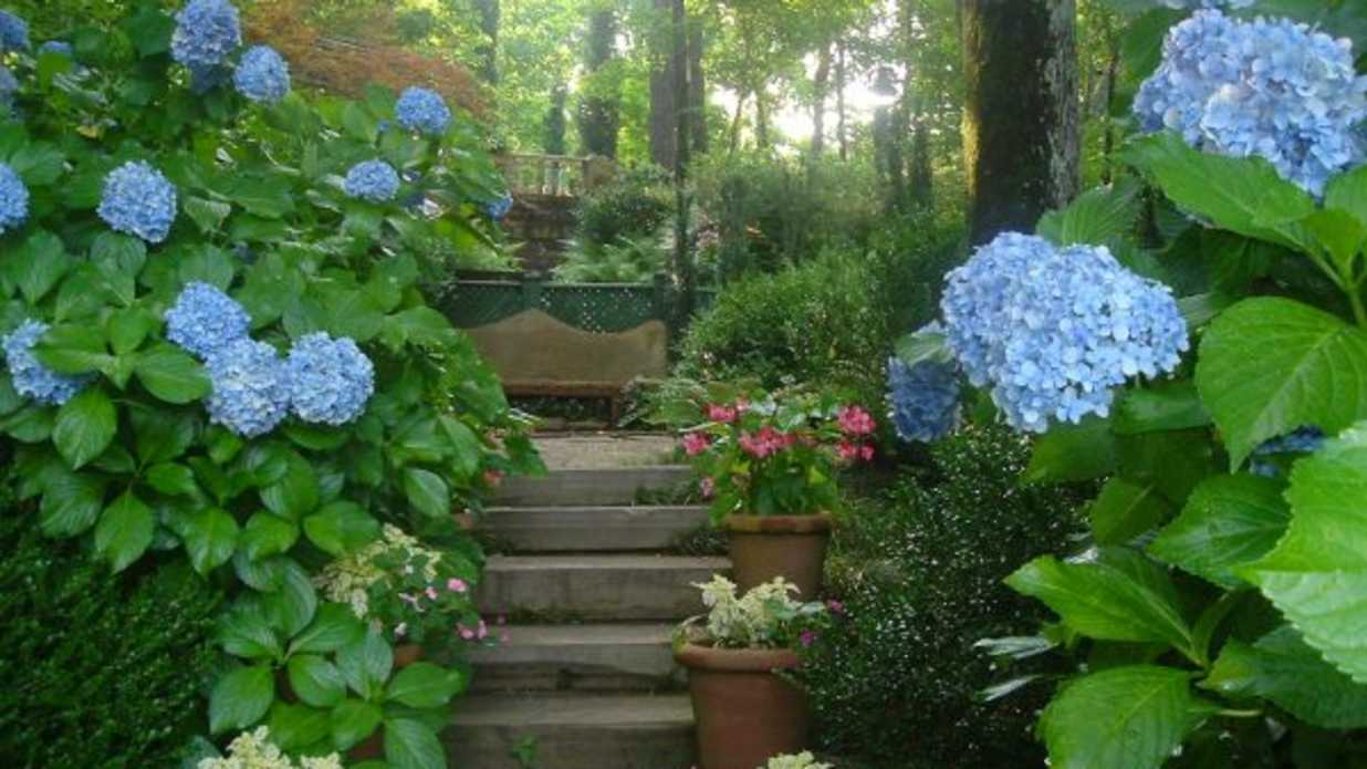 Six flowers that sing the blues southern living izmirmasajfo