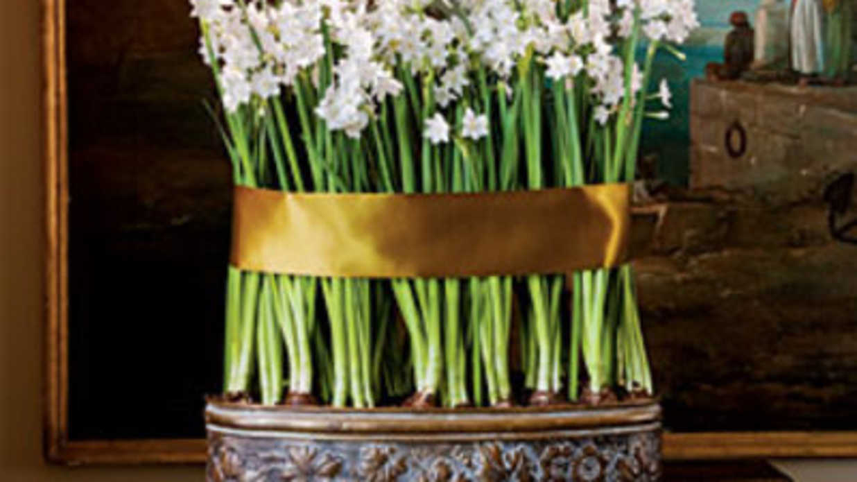 Can Your Paperwhites Be Saved Southern Living