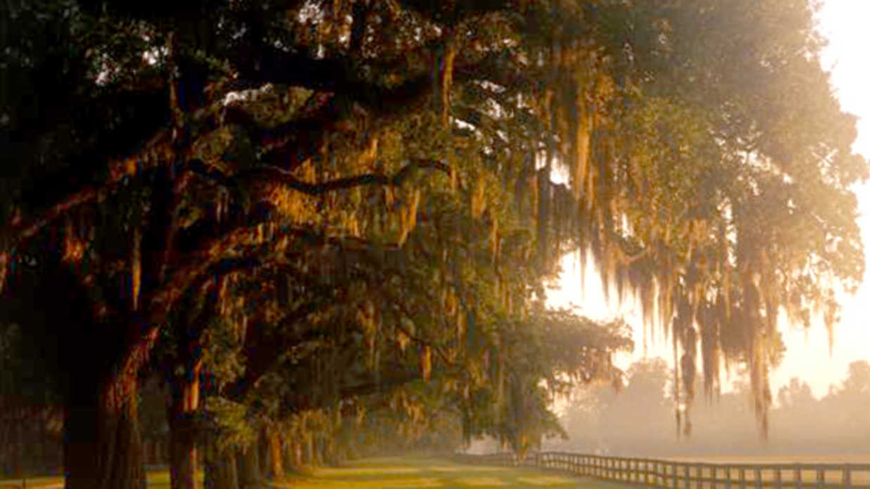 Spanish Moss - Southern Living