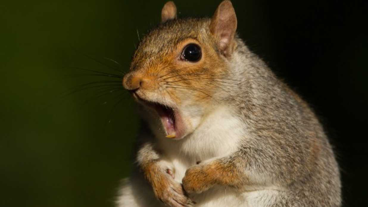 7 things you must know about stupid squirrels southern living