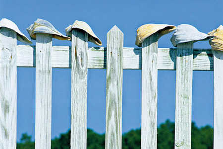 Cape Lookout Fence