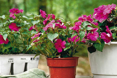 Sizing Up Plants: How to Buy Just Enough